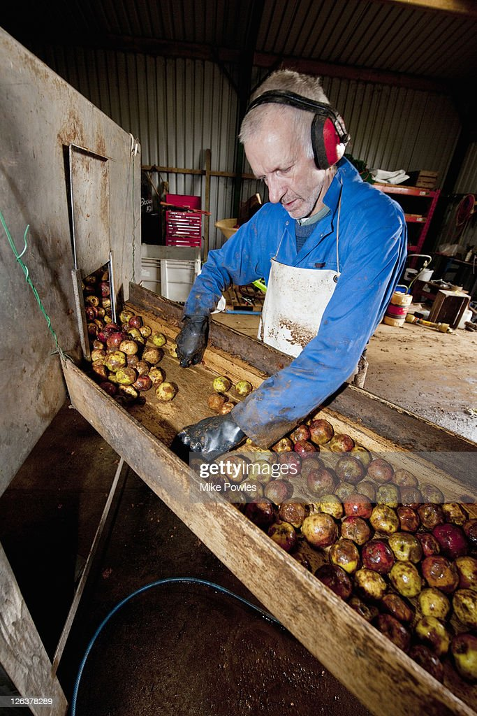 Cider apples sorted for production, England, UK : Stock Photo