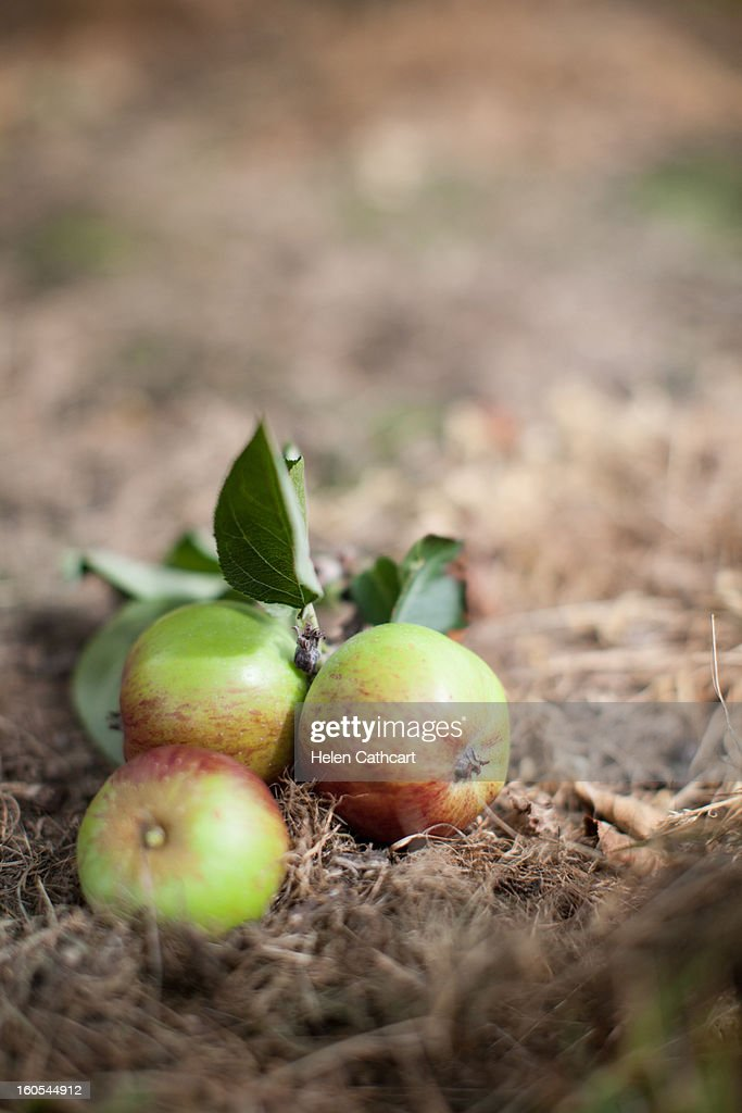 Cider Farm, Gloucester : Stock Photo