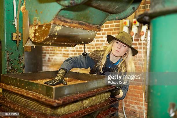Cider maker preparing apple press