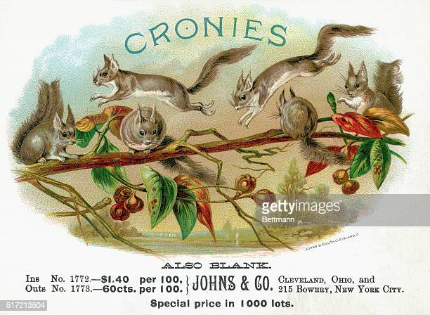Cigar box cover illustration 'Cronies' Color lithograph with squirrels cavorting on a chestnut tree Prices printed below Undated