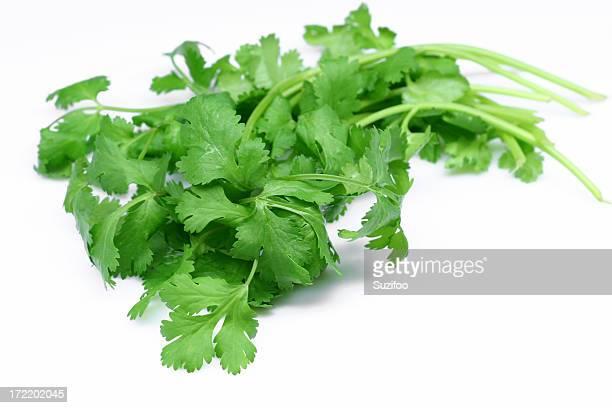 Restaurant cilantro
