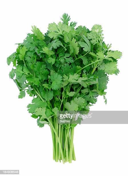 """Restaurant """"cilantro"""""""