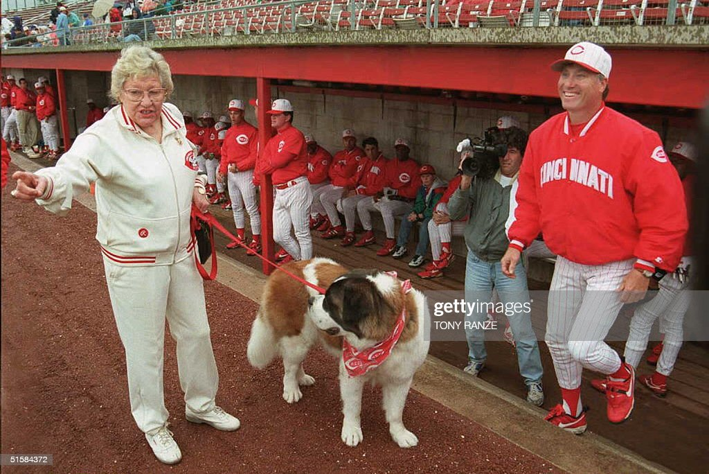 Cincinnati Reds owner Marge Schott walks her St. Bernard 'Schottzie' as Reds manager Ray Knight (R) exits the dugout to greet her before the start of the spring training game with the Detroit Tigers at Plant City Stadium 1 March. AFP PHOTO Tony RANZE