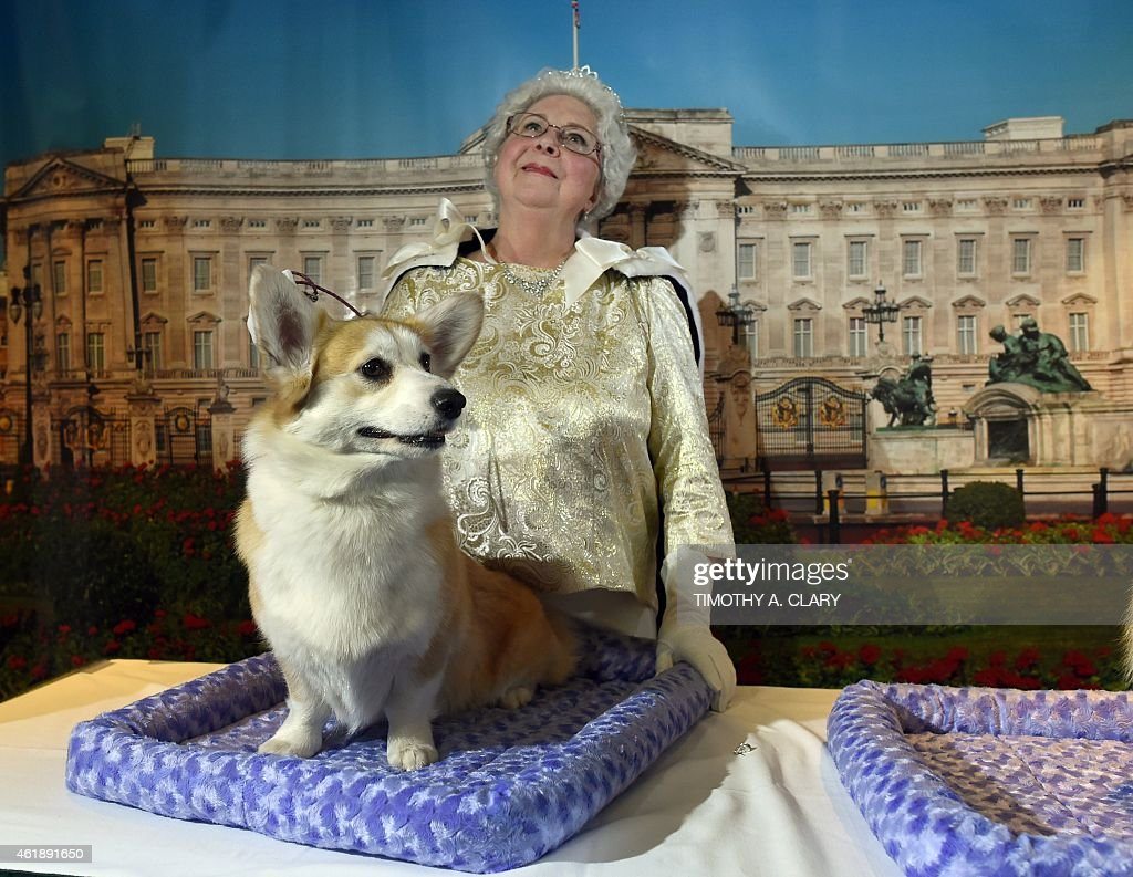 Cindy Savioli as Queen Elizabeth II with her Pembroke Welsh Corgi attend the 139th Annual Westminster Kennel Club Dog Show press conference on January 21,2015 to promote the two new breeds for the 139th Annual Westminster Kennel Club Dog Show, the 2nd Annual Masters Agility Championships and the Meet the Breeds event. AFP PHOTO / TIMOTHY A. CLARY