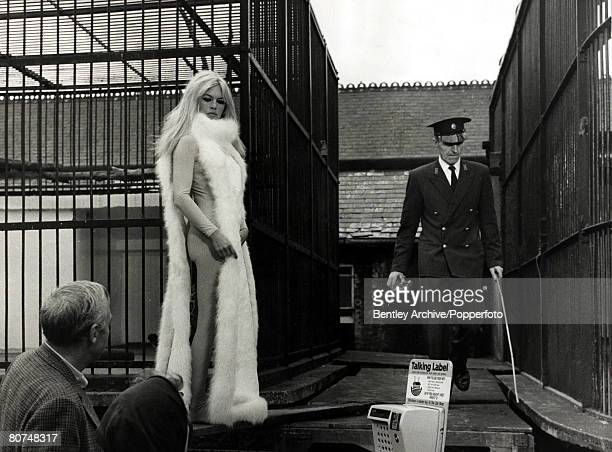 September1966 French film actress Brigitte Bardot rightpictured wearing arctic fox fur and tights while shooting an unusual scene at London Zoo for...