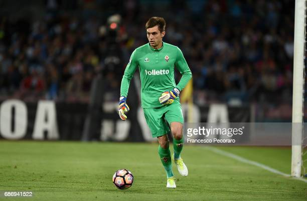 Ciprian Tatarusanu of ACF Fiorentina in action during the Serie A match between SSC Napoli and ACF Fiorentina at Stadio San Paolo on May 20 2017 in...