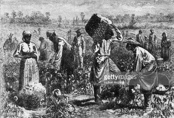 Slaves picking cotton on a plantation