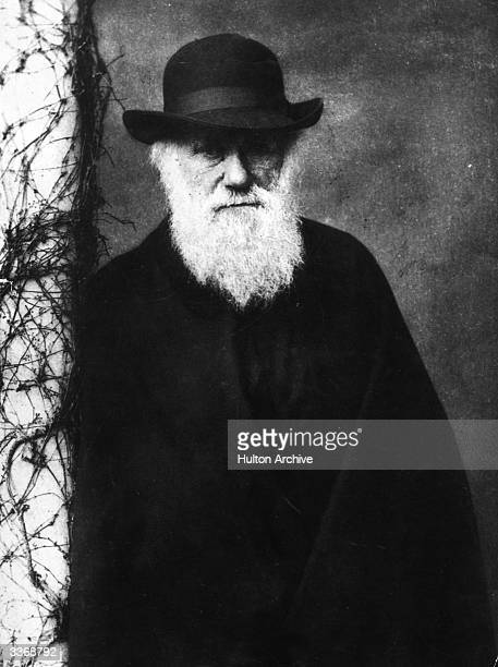 British scientist Charles Darwin who founded the principles of evolutionary theory after an expedition to the Galapagos Islands Original Artist By...