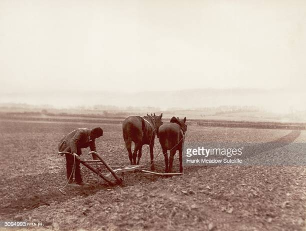 Two horses pulling a plough