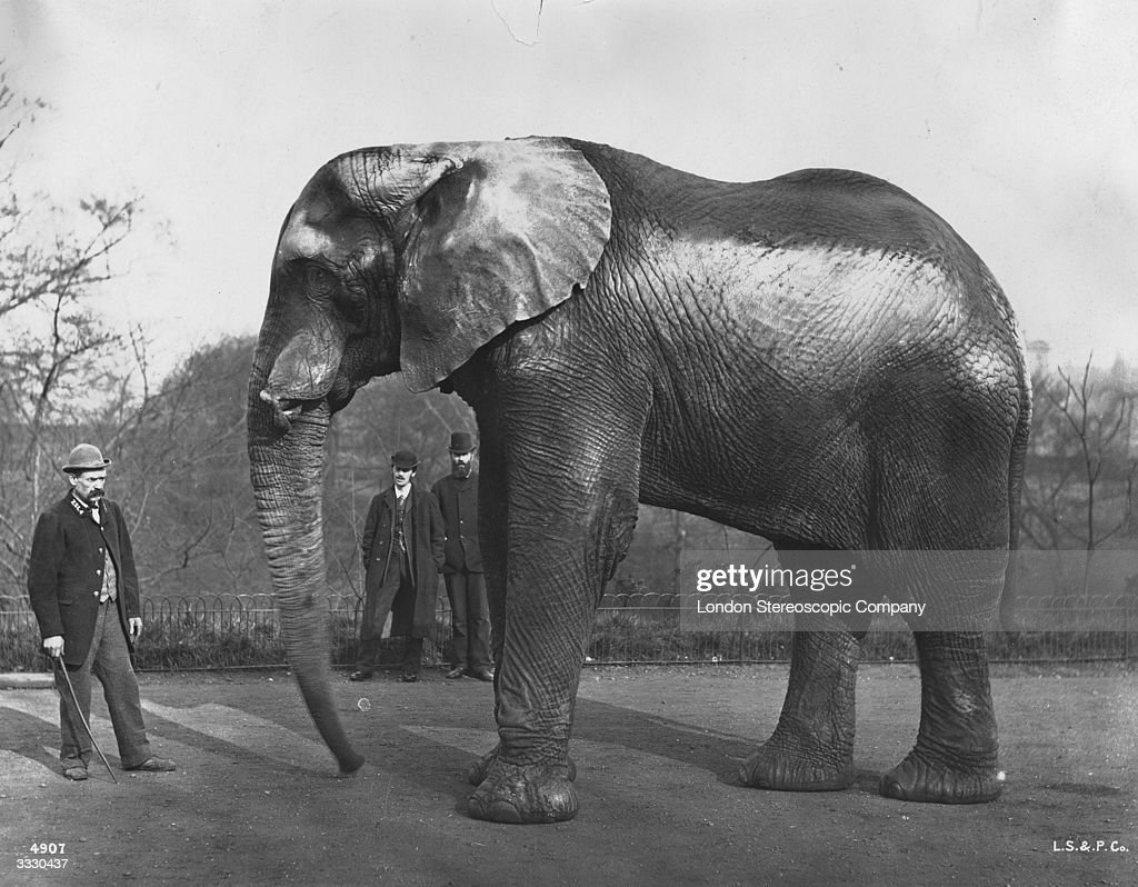 Image result for jumbo the elephant  getty images