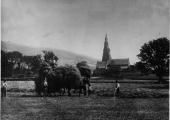Workers making hay near St Mary's Church Ambleside