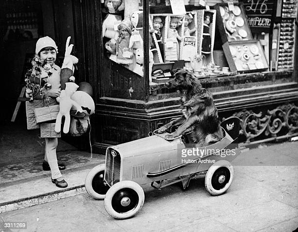 Henry Sandoni leaving a West End toy shop laden down with Christmas presents while his dog waits patiently in the car
