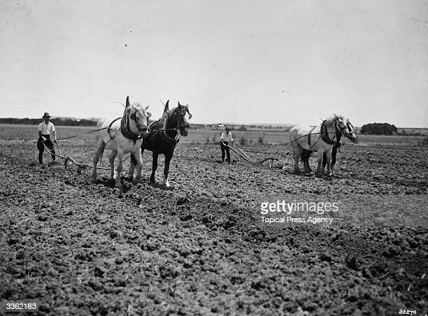 Opening irrigation furrows in a field by means of a horse and plough at the School of Agriculture Orange Free State