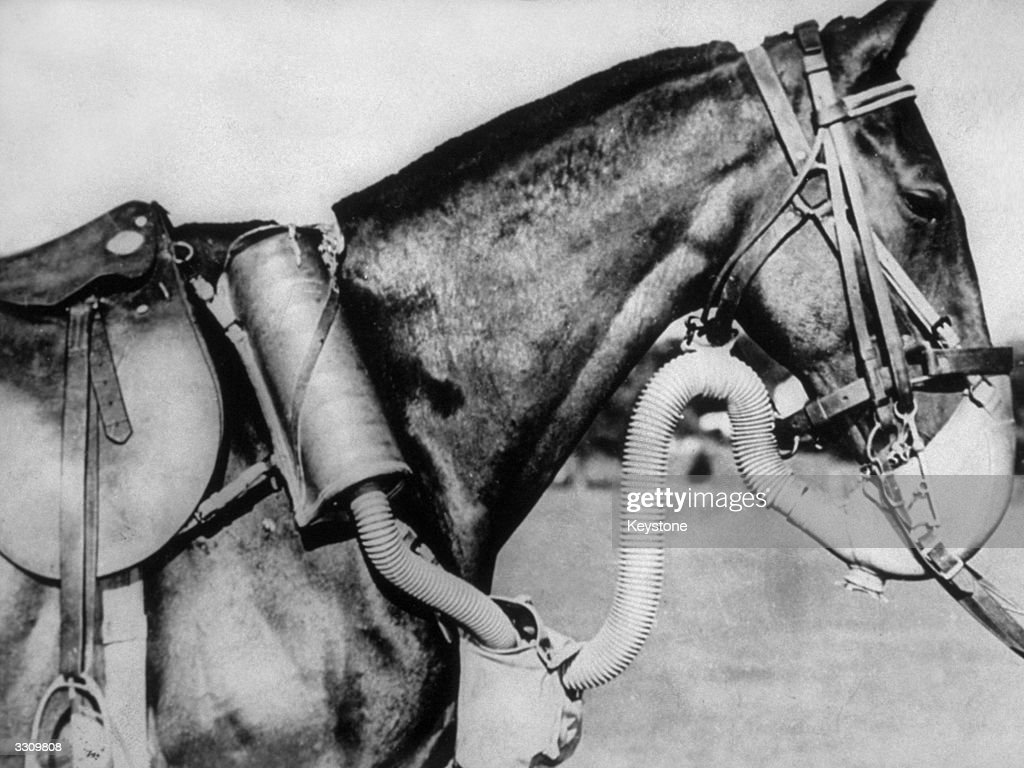 Army cavalry horse sporting a new type of gas mask, developed by the US Army Chemical Warfare Service, which supplied enough air to walk, trot, or gallop in action.