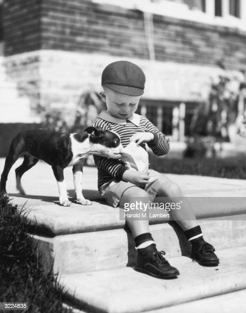 A frecklefaced boy in shorts sits on steps outdoors looking in a paper bag as a Boston terrier tries to open the bag with his teeth
