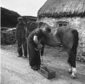 A blacksmith shoeing a horse in front of his workshop on Inishmore the largest of the Aran Islands in Galway Bay