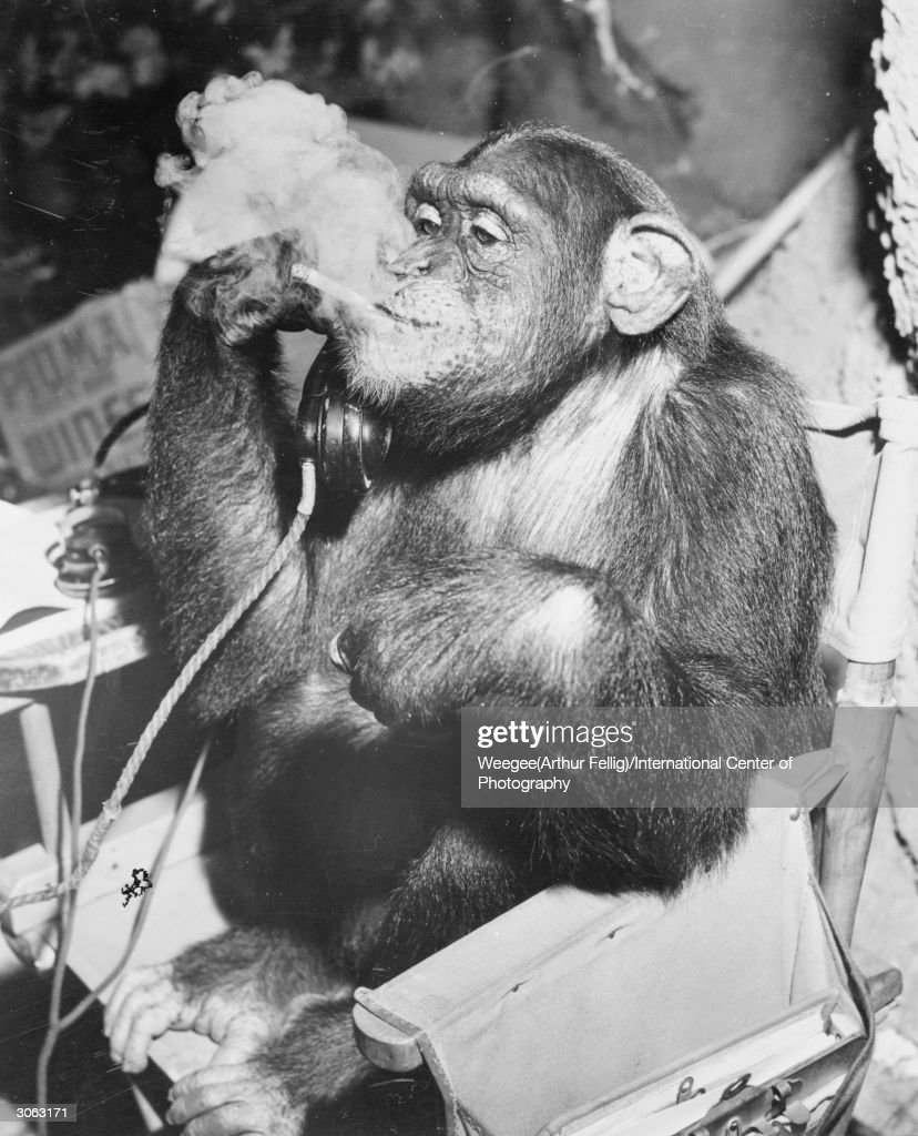 A chimpanzee makes a telephone call whilst smoking a cigarette. (Photo by Weegee(Arthur Fellig)/International Center of Photography/Getty Images)