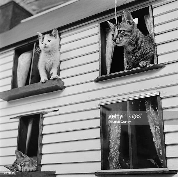 A group of kittens perch on the window ledges of a cat 'house' The 'house' with a scaleddown facade identical to a family home was built by Miss...
