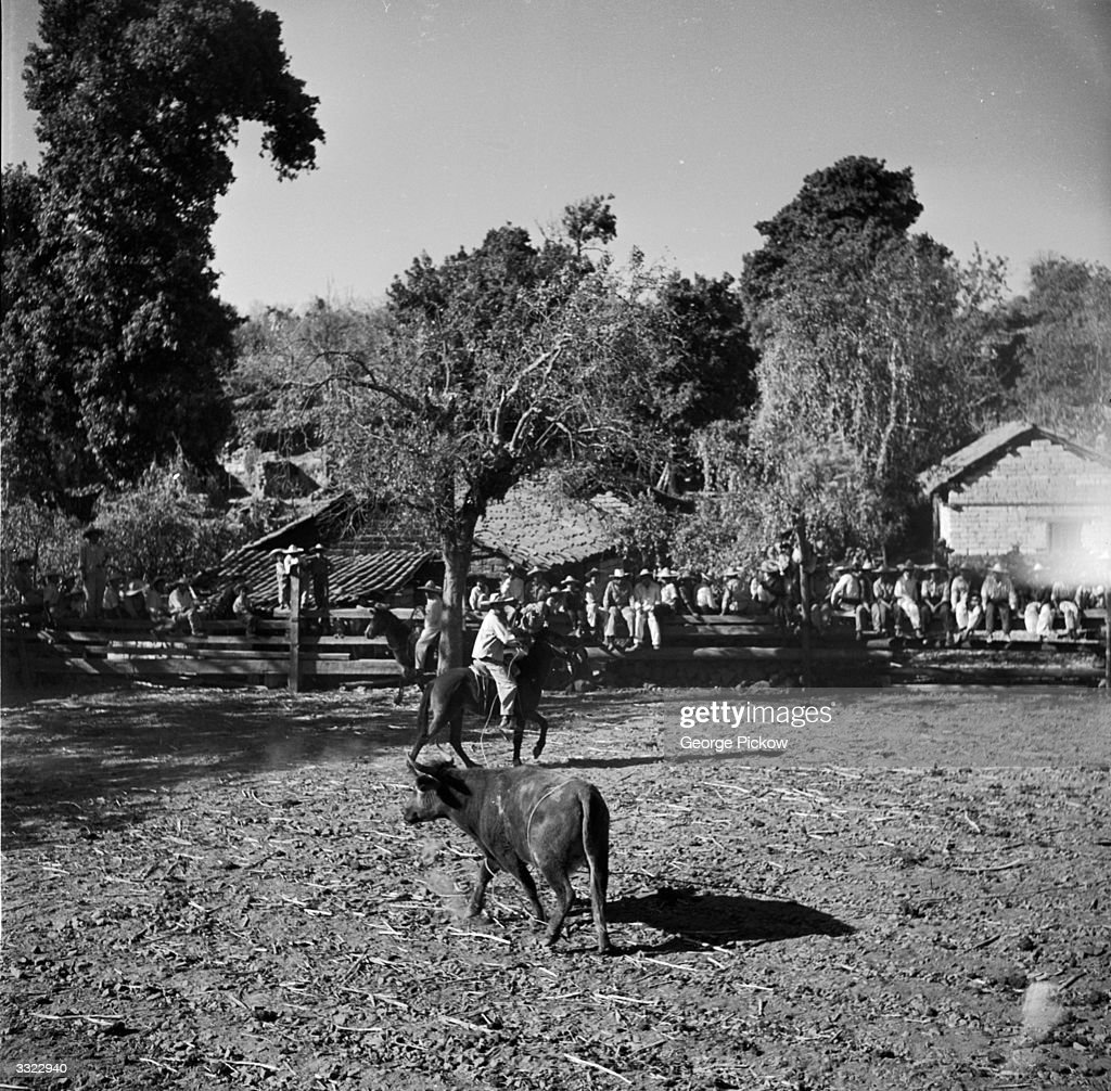 A Mexican charro lassos a rope around a bull in a corral
