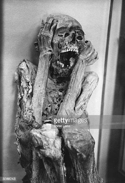 An Inca mummy one of many found in the Temple Of The Sun Mummies were brought out on feast days for the reigning Inca to view this one now resides in...
