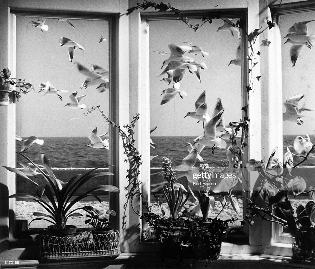 A flock of gulls flying over the North Sea viewed through a bay window at a house in Aldeburgh, Suffolk.