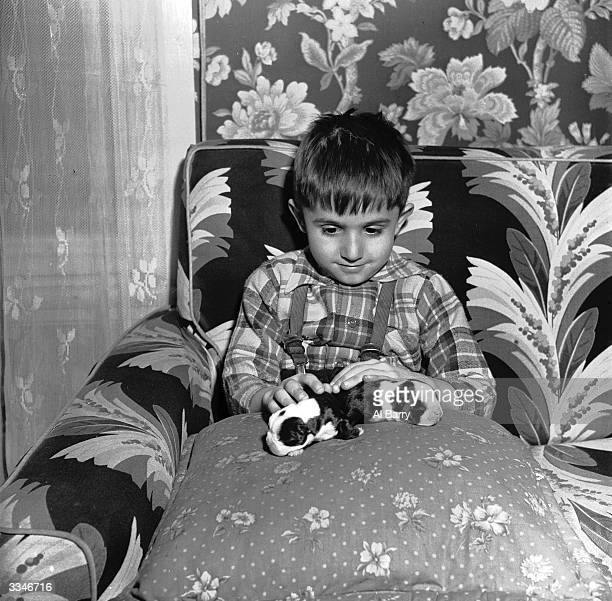 A young boy in bed with a couple of Boston terrier puppies