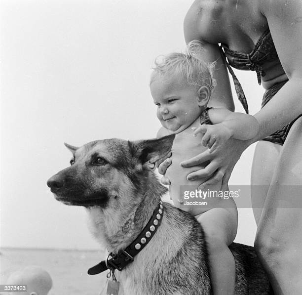 Baby Cecelia Novel is placed on the family Alsatian's back for a ride the placid pet does not seem to mind