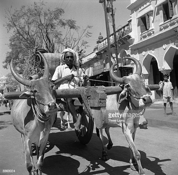 Oxen pulling a cart through the streets of Mysore in the southern state of Karnataka India