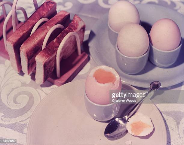 The first meal of the day boiled eggs and buttered toast for breakfast