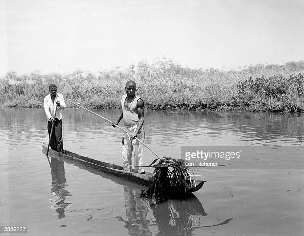 Two men using a 'butterfly' a contraption for cutting and raking up weeds from channel beds in Lake Bangweulu Zambia