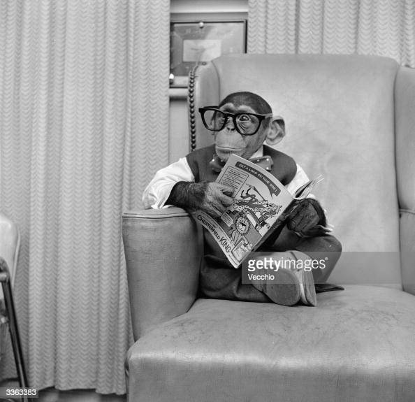 Young chimpanzee Kokomo Jnr sits in a chair wearing glasses and holding a comic book at his owner's apartment in New York City