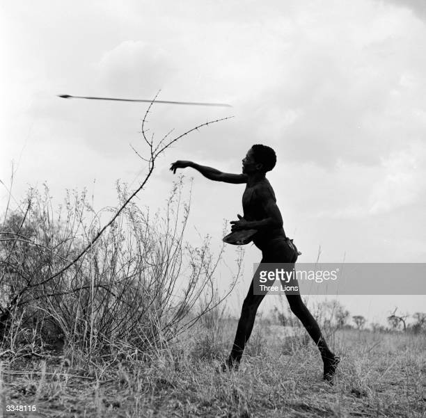 A South African bushman hunting big game throws his spear or assagai