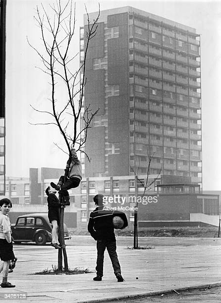 Boys climbing a tree near a modern tower block in the Gorbals area of Glasgow The tenements which had formerly occupied the site were among the worst...