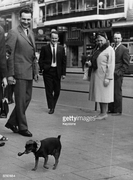 Onlookers view this pipe smoking dog with amusement as he accompanies his owner to work in Brussels