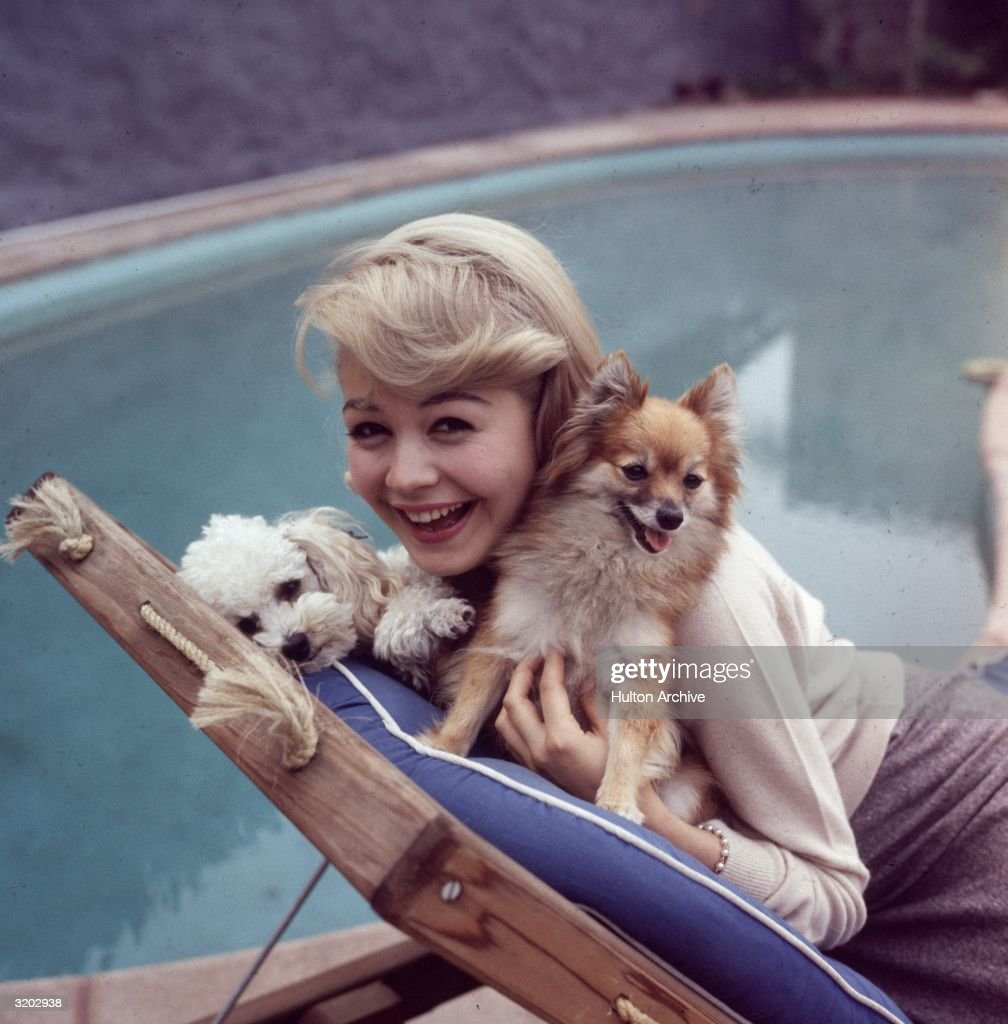 American actor Sandra Dee poses on a deck chair with her pet dogs, a Pomeranian and a poodle, in front of a swimming pool, early 1960s.