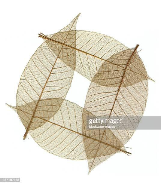 Circle of leaves