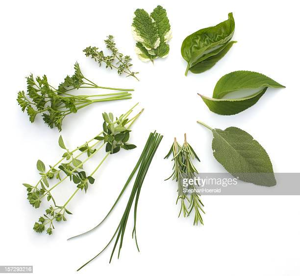Circular arrangement of various herbs, isolated on white
