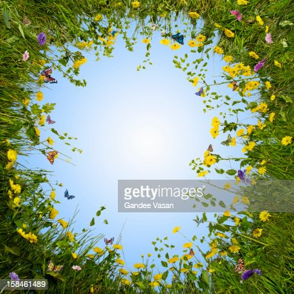 Circular Meadow : Stock Photo