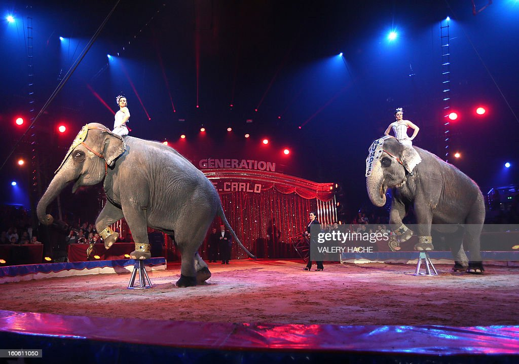 Circus artists Noelia and Natalia and the elephants Gran Circo Mundial perform the second New Generation International Circus Festival in Monaco on February 3, 2013. The event runs from February 2 until February 3, 2013. AFP PHOTO / VALERY HACHE