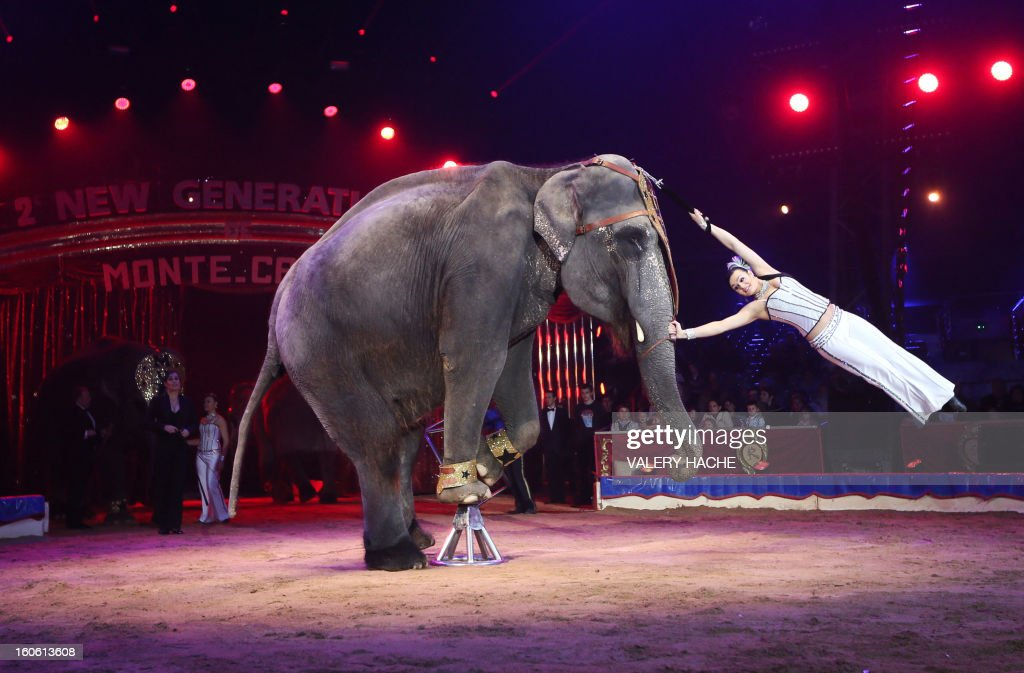 Circus artists 'Noelia and Natalia and the elephants Gran Circo Mundial' perform during the second 'New Generation' International Circus Festival in Monaco, on February 3, 2013. The event runs until February 3, 2013. AFP PHOTO / VALERY HACHE
