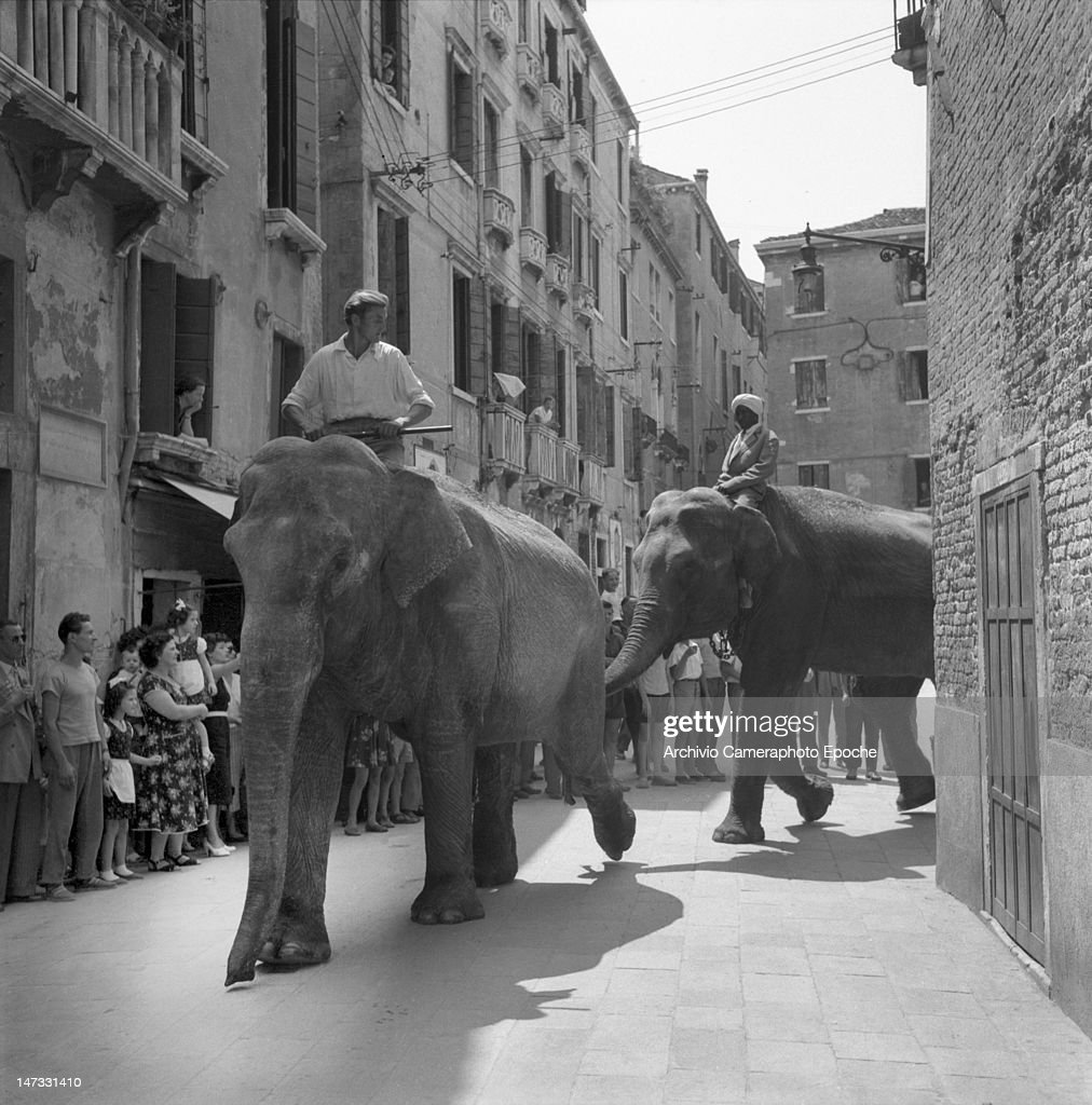 Circus elephants crossing the city with theyr trainers, the crows stunned, Venice, 1954.