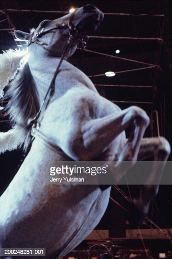 Circus horse standing on hind legs : Stock Photo