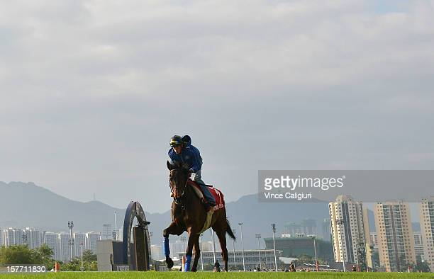 Cirrus Des Aigles of France during trackwork session at Sha Tin racecourse on December 6 2012 in Hong Kong Hong Kong