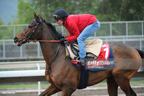 Cirrus Des Aigles of France gallops on the All Weather Track during a trackwork session at Sha Tin Racecourse on December 11 2014 in Hong Kong Hong...