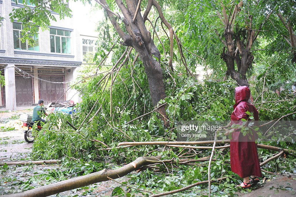 A citizen clean up trees damaged by Haiyan-triggered strong winds on November 11, 2013 in Qionghai, China. Typhoon Haiyan, now categorized as a tropical depression, brought strong winds and rainstorms to South China on Sunday.