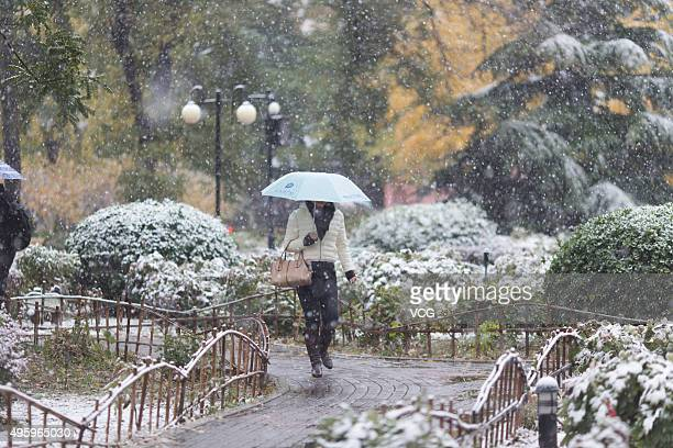A citizen holds umbrellas while walking in snow on November 6 2015 in Beijing China Beijing welcomed its first winter snow with the temperature...