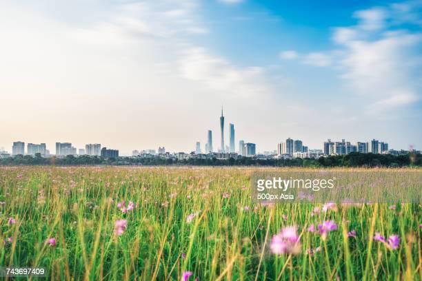 City of Guangzhou with Guangzhou TV tower across meadow, Guangdong, China