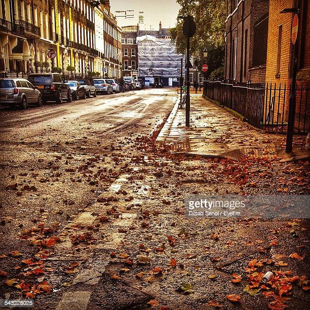 City Street In Autumn