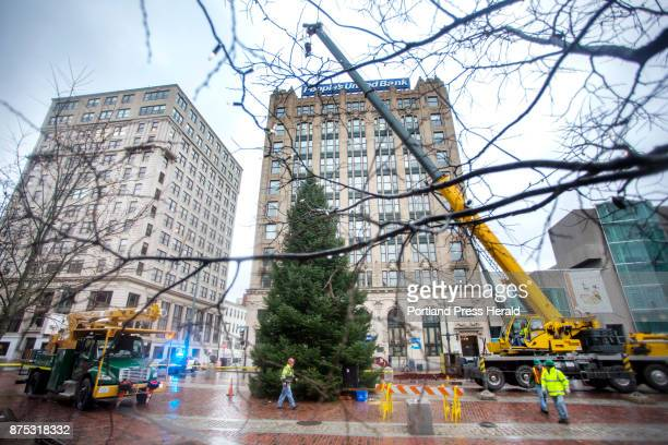 City workers install a 42foot Balsam Fir tree in Monument Square on Thursday The tree which weighs 4800 pounds was taken from the LaFlamme family...