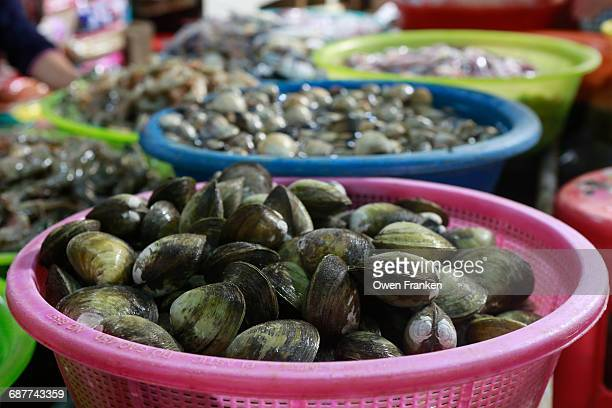 clams and other seafood in a market